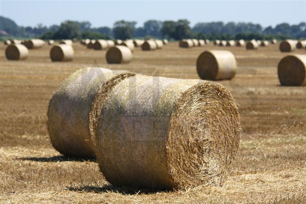 Prodej několika polí o výměře 62.786 m2 v katastrálním území Sloveč, okres Nymburk